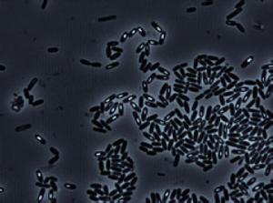 Microbe Cluster