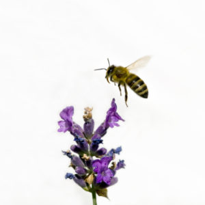 bee and flower small