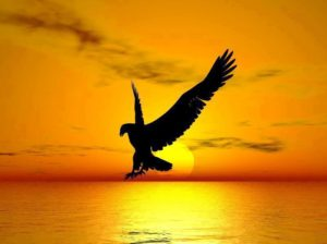 eagle and water