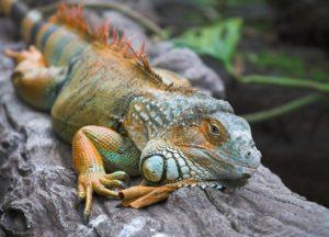 FEATIure Lizard iStock_000003033352Small