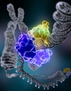 Proteins: how they provide striking evidence of design 256px-DNA_Repair-233x300
