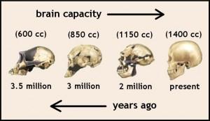 brain-evolution-3