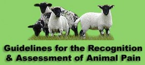 guidelines for assessment of animal pain