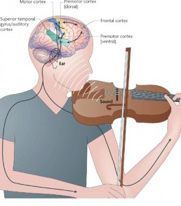 Brain centers with violinist picture