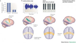 coupling auditory and motor