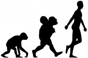 FEATURE   HUMAN ANCESTORS