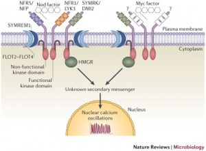 Joint pathways to the nuclear calcium