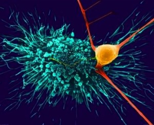 crop astrocyte touching neuron