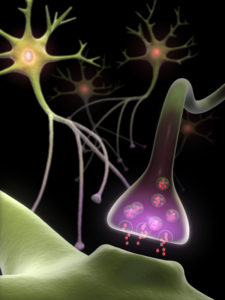 FEATURE MULTIPLE NEUROTRANSMITTERS iStock_000008566343Small