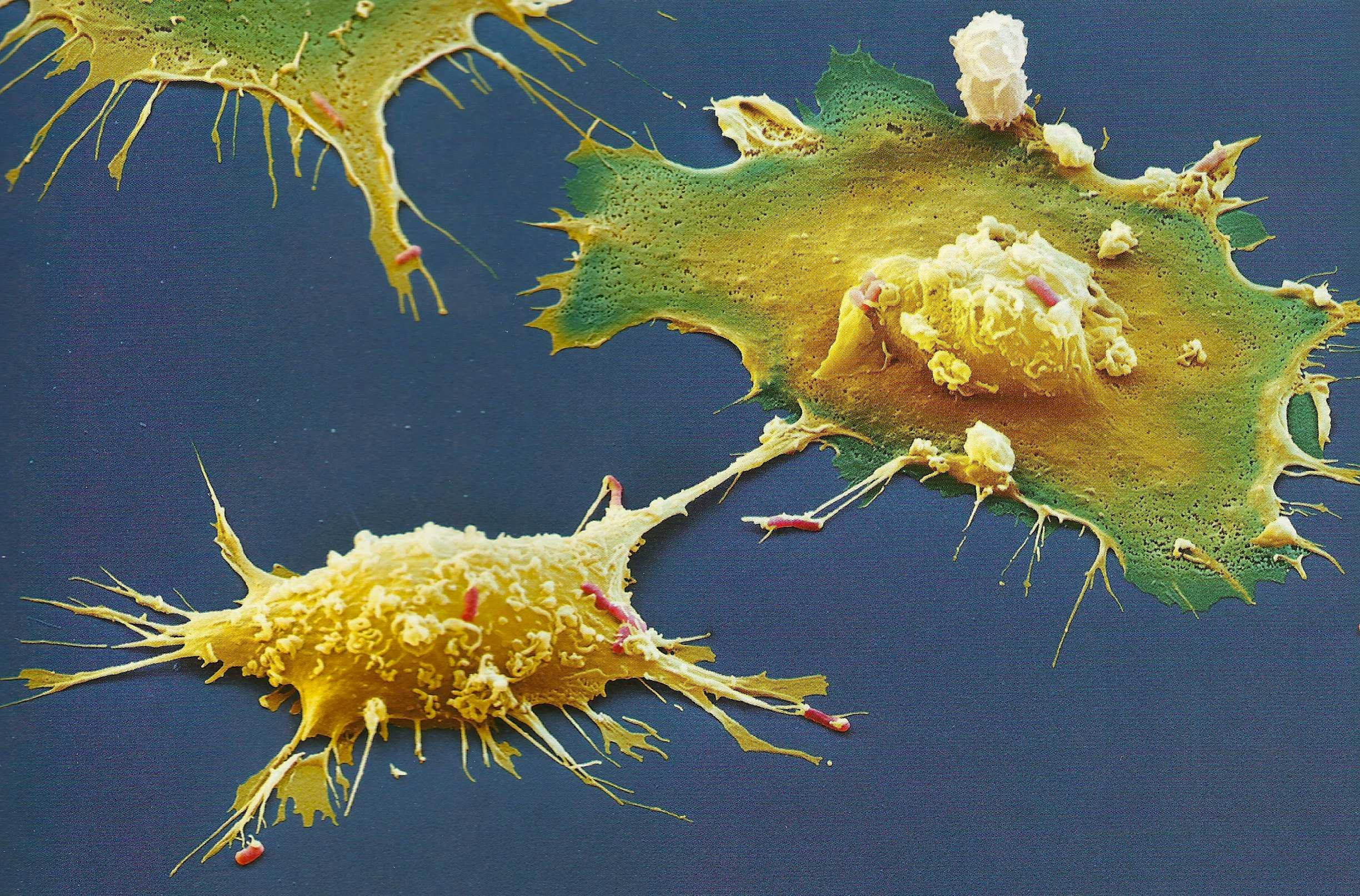Non Immune Cells Also Combat Microbes