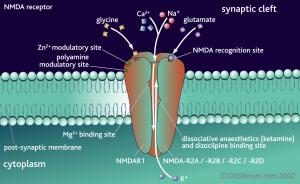 NMDA-receptor