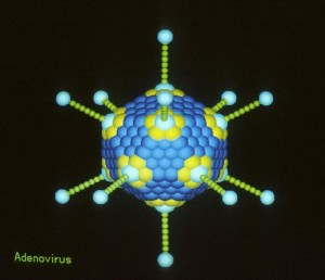 Adenovirus PUBLIC DOMAIN