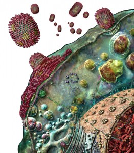 Influenza virus replication or life cycle in a host cell (W).