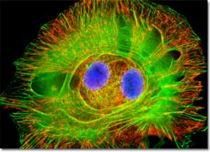 microscopy-1