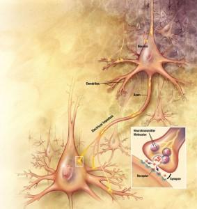Neurons_big1