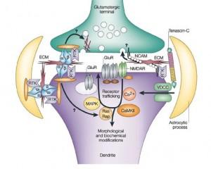 crop synapse