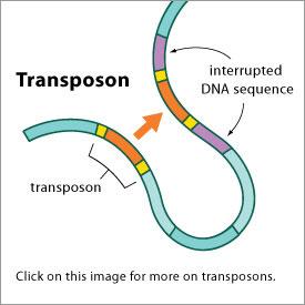 transposons_275x275