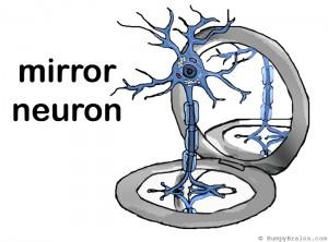 mirror_neuron
