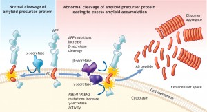 Excell amyloid