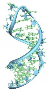 Pre-mRNA-1ysv.png-tubes