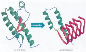 I11-08-prion