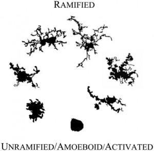 Ramified
