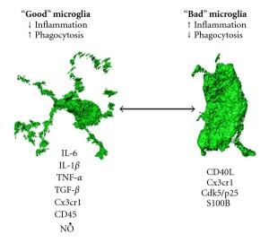 good and bad microglia