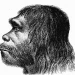 Neanderthaler_Fund