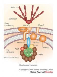 Nucleoids 2