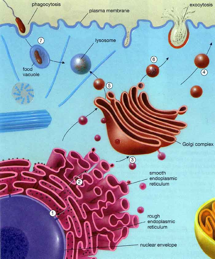 Vesicles Transport Information