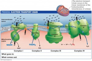 09_21_electron_transport-L