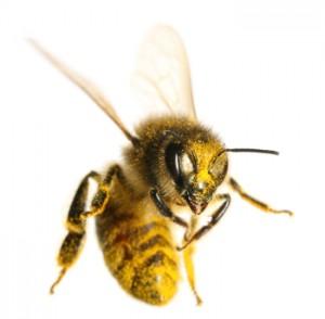 bee individual 2