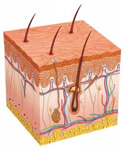 bigstock-human skin cell -43968430