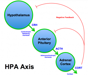 PD ATRIBUTE  BrianMSweis HPA_Axis_Diagram_(Brian_M_Sweis_2012)