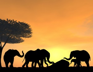 iStock_Grieving elephant  000000386370Small
