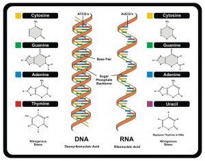 Vector - DNA and RNA