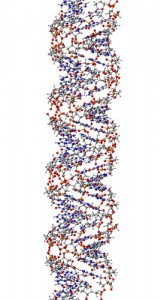 shutterstock_182654546 DNA