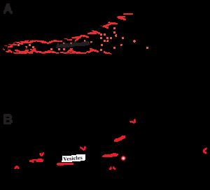 Cellmigrationmodels   Cellmigrationmodels