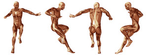 3D human or man with muscles for anatomy or sport designs. A mal