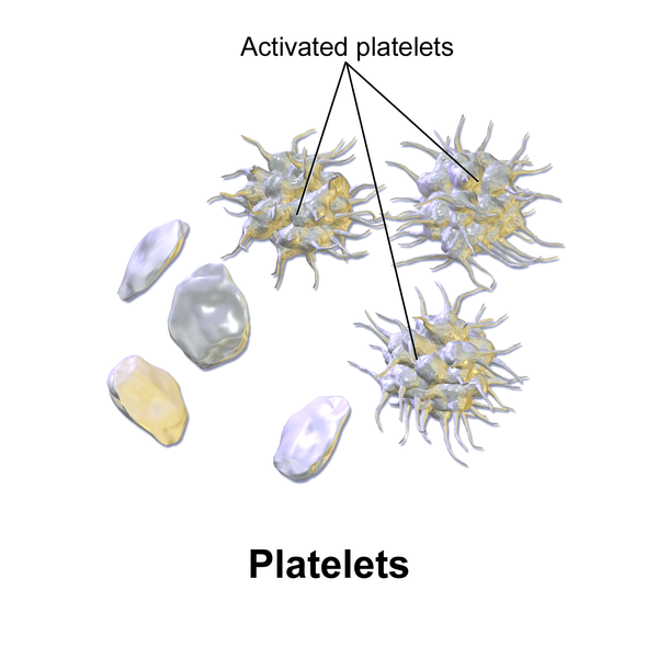 Blood GCSE |Platelets Diagram Gcse