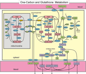 CopperKettle  Cycles  WIK   692px-One-carbon_metabolism_and_the_transsulfuration_pathway
