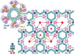 Hexagonal Receptors