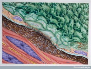 N0020040 Functional platelet morph.: reversible agg.