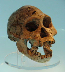 Conty WIK  544px-Dmanisi_skull