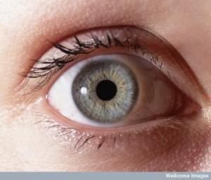 N0021053 Normal eye - close-up
