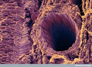B0001051 Retina showing rod cells.