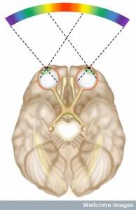 N0026049 Sensory pathway of vision