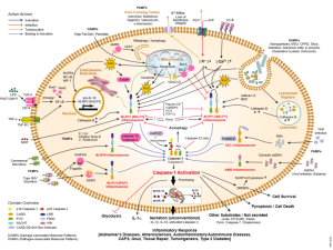 Lalvers  WIK   Inflammasomes_activation_and_signaling_overview