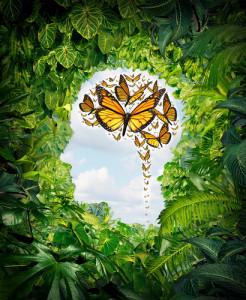 shutterstock_179204051  leafy brain meditation
