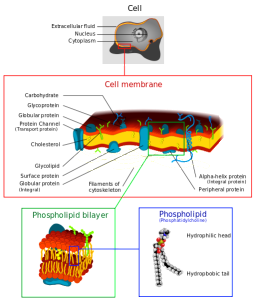 Dhatfield wiki cell membrane details